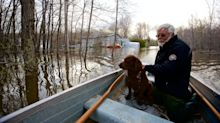Floodwater can pose a risk to pets' health: What you need to know