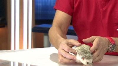 Dr. Kim Answers Questions, Brings Hedgehog