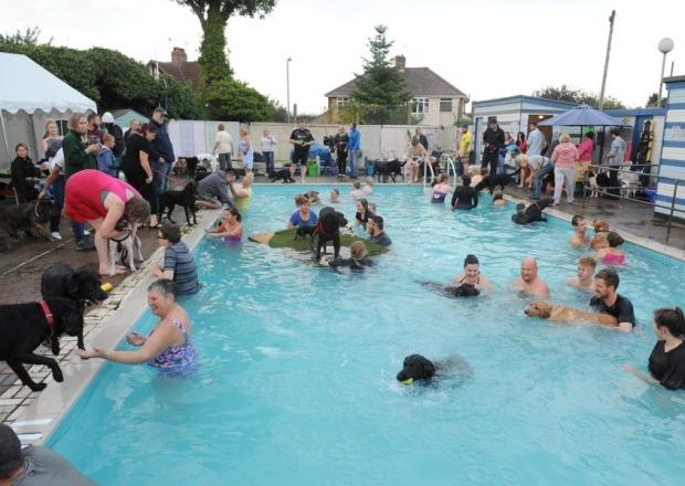 Public Pool Parties for Dogs Are the Best Thing About End of