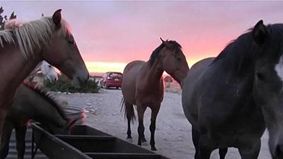 Battle Brewing Over Feral Horses in New Mexico
