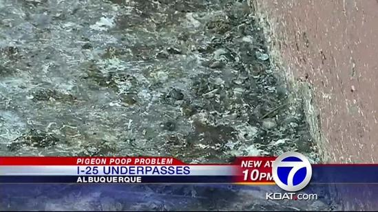 Pigeon poop piles up near Interstate 25