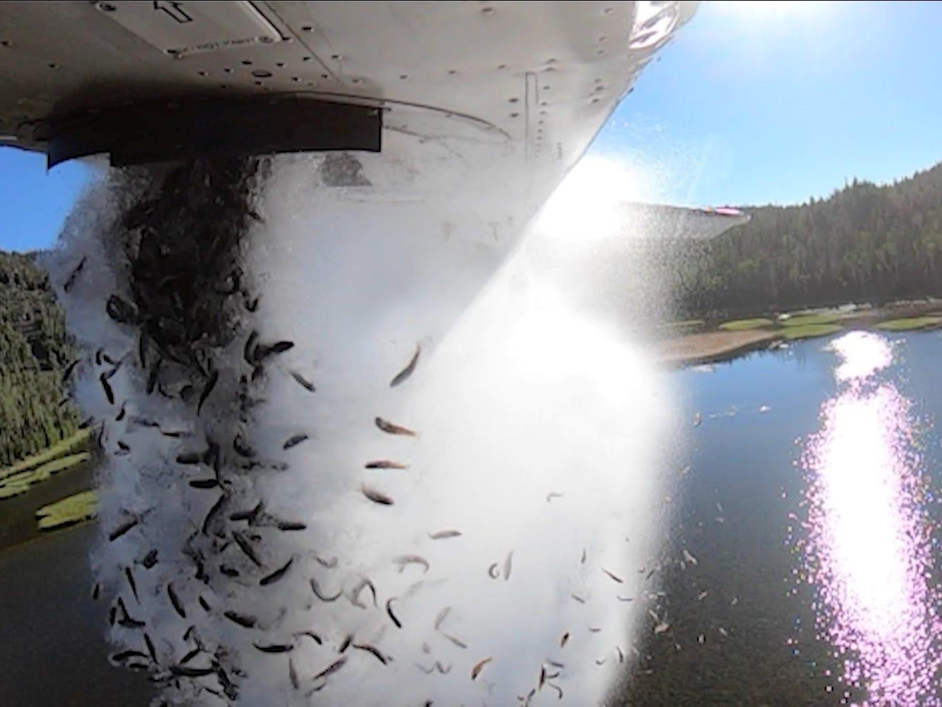 Video shows Utah wildlife agency restocking lakes by dumping thousands of fish from a plane