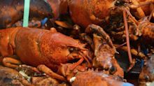 As Aldi and Lidl Sell Lobsters, Tesco Spies an Opening