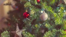Grüne Weihnachtsbäume bekommen Konkurrenz - schwarze Nadeln liegen voll im Trend