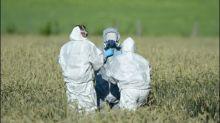 Überlebender Eurofighter-Pilot aus dem Krankenhaus entlassen