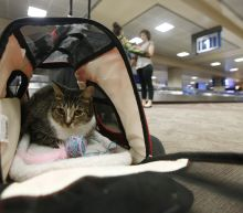 New rules could bump emotional-support animals from planes