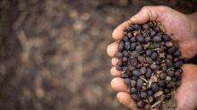 'Café especial' brasileiro é ouro em grão para pequenos produtores