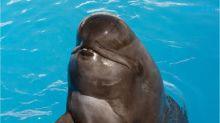 SeaWorld's oldest pilot whale dies