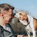 Interest in fostering animals surges amid coronavirus: ASPCA