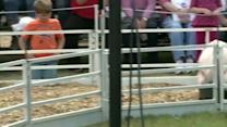 Crowds line up for pig races at Mississippi State Fair