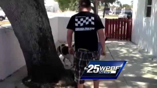 Stolen dog reunited with family