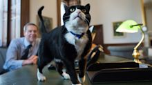 Palmerston the Foreign Office cat steps down