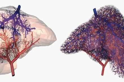 Scientists have figured out how to create blood vessels in 3D printed organs