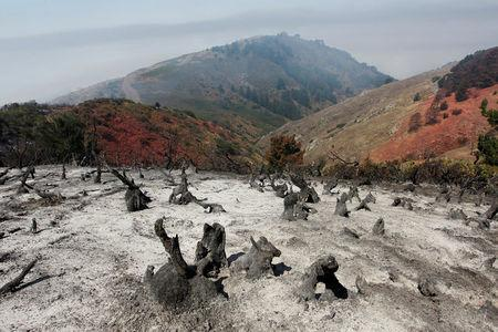 A charred slope smolders after the Soberanes Fire burned through the area in the mountains above Carmel Highlands, California, U.S. July 28, 2016. REUTERS/Michael Fiala