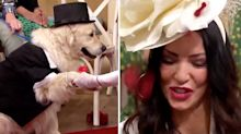 Former glamour model marries golden retriever after '221 unsuccessful dates'