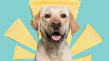5 Cute Animals To End The Week: Dog Downs Parmesan Block, Prompts 'Tw*t Dogs' Thread