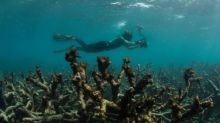 Great Barrier Reef can no longer be saved, Australian experts concede