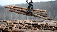 Forestry industry absorbing hits
