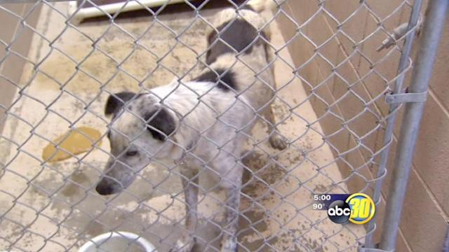 Suspect in Squaw Valley animal seizure faces charges