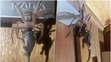 Giant Hairy Spider Eats a Possum! Pic Captured by Aussie Couple in Tasmania Hotel Room Goes Viral