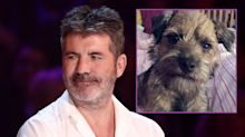 Missing puppy found after Simon Cowell offered £10,000 reward