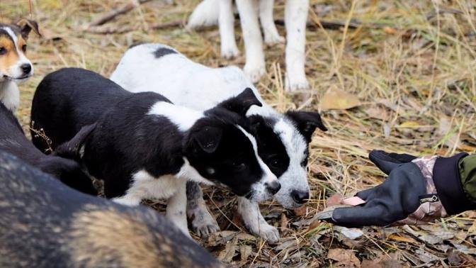 ¿Recuerdas a los perritos radioactivos de Chernóbil? La historia tendrá un final feliz para ellos