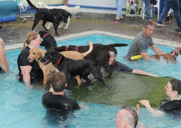 """<p>These dogs at a pool in <a href=""""http://www.bostonstandard.co.uk/news/local/video-doggie-swim-sessions-a-hit-at-village-pool-1-6950253"""" rel=""""nofollow noopener"""" target=""""_blank"""" data-ylk=""""slk:Boston"""" class=""""link rapid-noclick-resp"""">Boston</a> turned this ramp into a lampoon boat. <i>(Photo: Andy Hubbert via </i><a href=""""http://www.bostonstandard.co.uk/news/local/video-doggie-swim-sessions-a-hit-at-village-pool-1-6950253"""" rel=""""nofollow noopener"""" target=""""_blank"""" data-ylk=""""slk:the Boston Standard"""" class=""""link rapid-noclick-resp""""><i>the </i>Boston Standard</a><i>)</i></p>"""