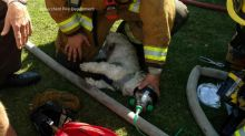 California firefighters, Girl Scouts prove to be a dog-saving duo