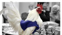 Making Clothes for Animals Is the Trendiest Thing to Do Right Now
