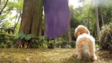La campaña que aprovecha el reto viral del 'What the Fluff' para concienciar sobre el abandono de mascotas