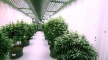 Organigram shares dive nearly 20% after warning Q4 revenue would miss Q3 levels