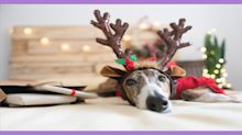 How to make sure your pet has a stress-free holiday