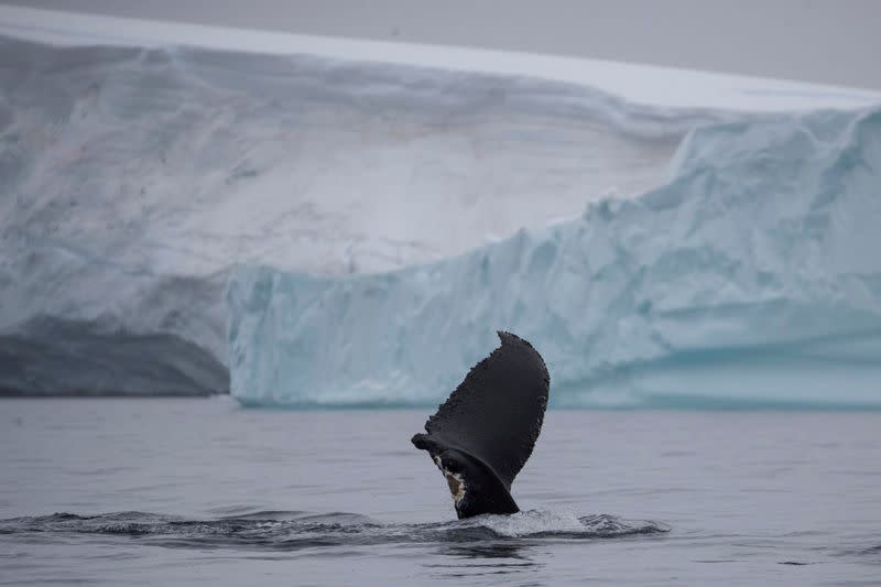 All-female Scientific Coalition Calls for Marine Protection of Antarctic Peninsula
