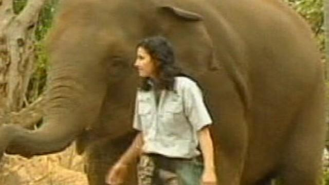 Zookeeper Crushed by Elephant Fights for Her Life