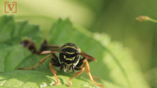 West Virginia state police are cautioning residents against using wasp sprayas an alternative form of methamphetamine after three people purportedlyoverdosed