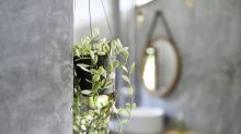 Houseplants that would love to live in your bathroom