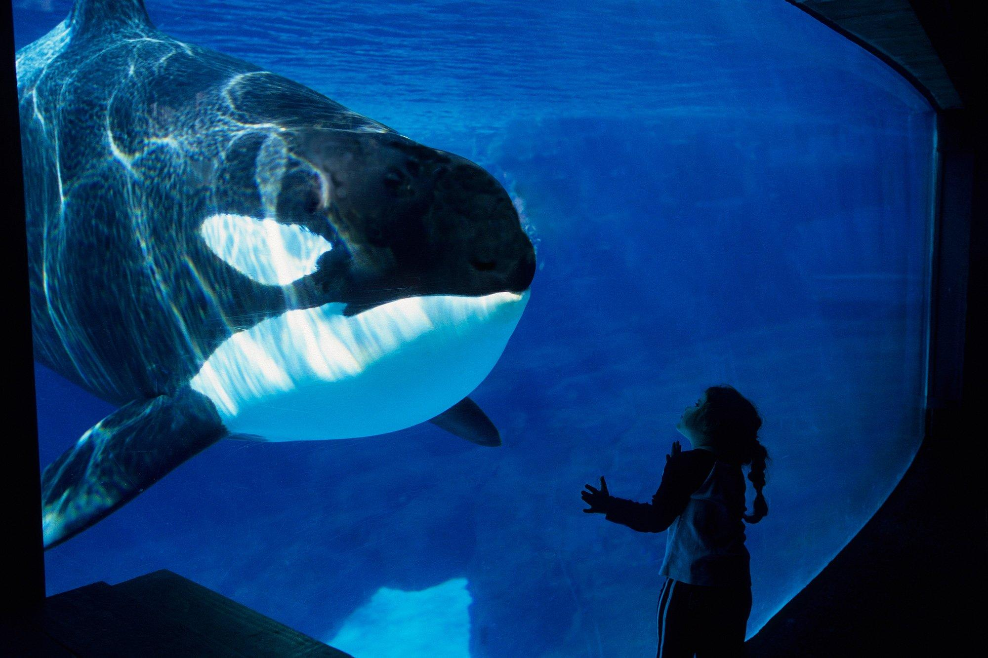 Canada Passes Ban Making It Illegal to Keep Dolphins and Whales in Captivity
