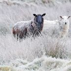 UK weather forecast: Met Office warns of 'thundersnow' as deep freeze grips country
