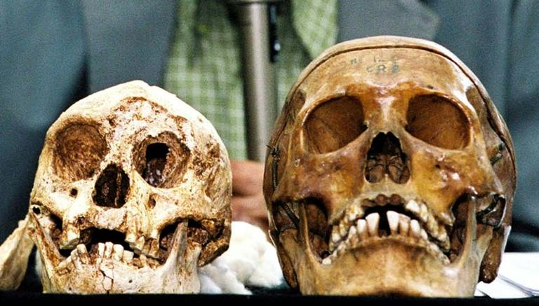 The remains of Indonesia's hobbit-sized humans (L) and modern human (R) are displayed at Gadjah Mada University in Yogyakarta, Indonesia on November 5, 2004