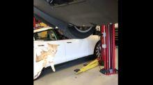 Mechanics free trapped kitten from car bumper