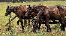 Des chevaux de course de plus en plus… consanguins