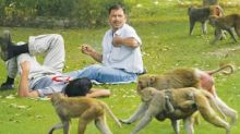 Stray dogs and monkeys continue to bleed Delhi
