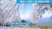 【有片】日本奈良現奇景 「霧氷」、藍天共演!