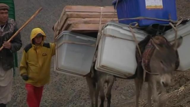 Donkeys transport ballot boxes for Afghan elections