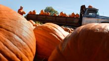 Pumpkin season is officially here, but excitement may be slowing