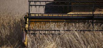 Buenas cosechas en Alemania y Polonia impulsan producción trigo de la UE