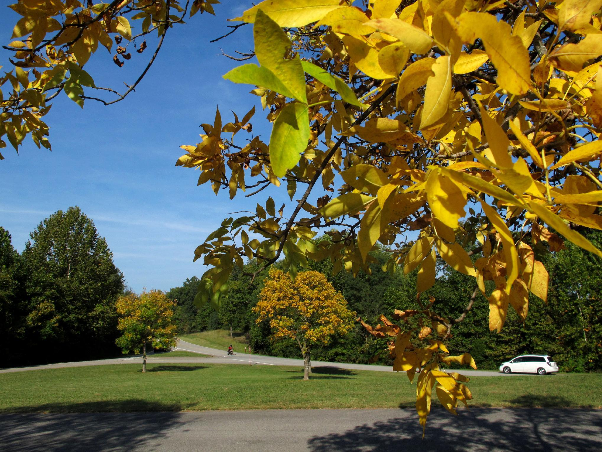 Trees display yellow leaves to motorists on Saturday, Sept. 29, 2012, on Natchez Trace Parkway in Williamson County, Tenn. As days get shorter and nights become chillier, the annual fall foliage show is getting under way in the Southern Appalachians. (AP Photo/Teresa Wasson)