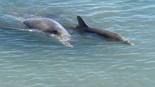 西澳4200KM之旅:海底陸上野生動物大集合