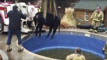 Oklahoma City firefighters rescue cow stuck in swimming pool