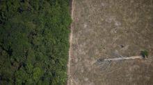 Satélite de monitoramento da Amazônia a ser adquirido vai complementar trabalho do Inpe, diz Defesa